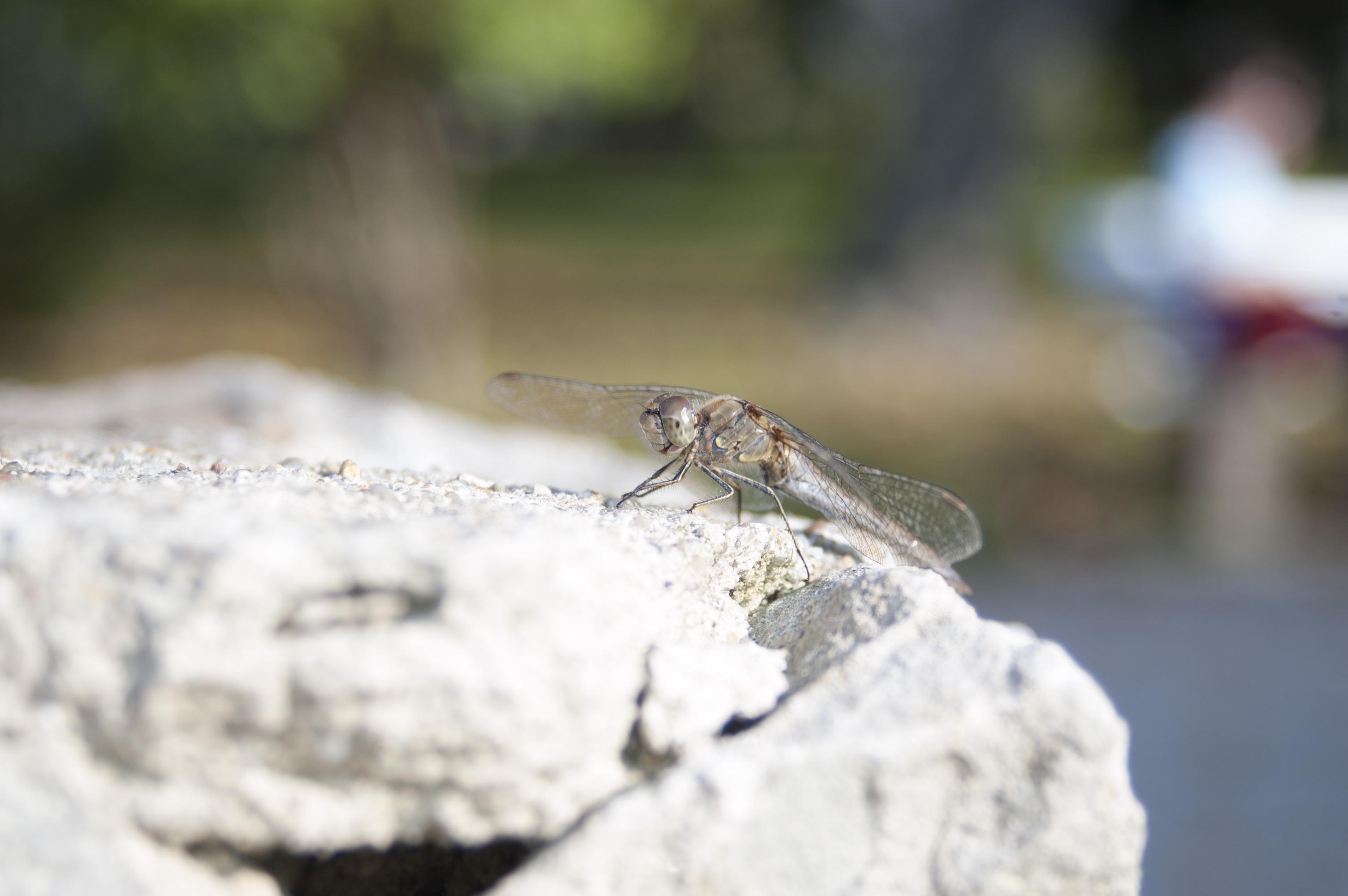 Libelle im Gradierwerk von Bad Dürrenberg